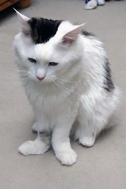 darf jeder katzen züchten